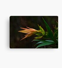 Beauty in the Bush Canvas Print