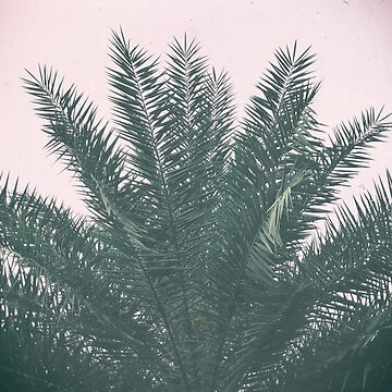 Palm Tree by ibphotos