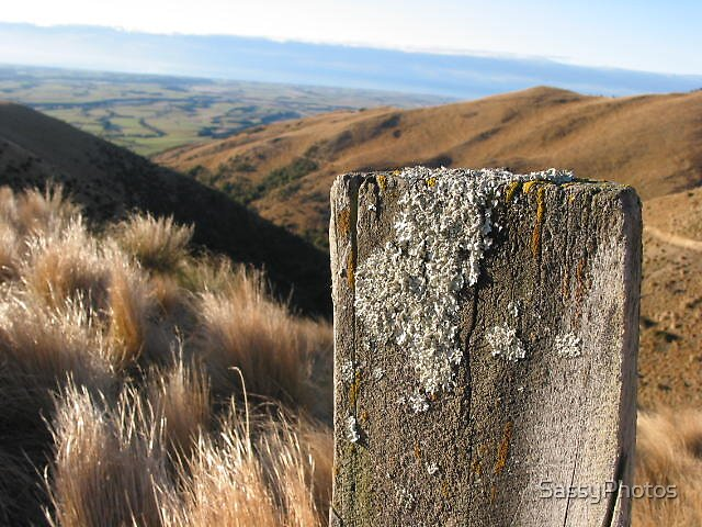 fence line by SassyPhotos