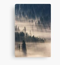 coniferous forest in foggy mountains Canvas Print
