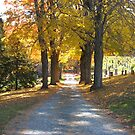 Old Cemetery Road by Stormoak Lonewind