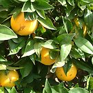 Naranjas by Fay  Hughes