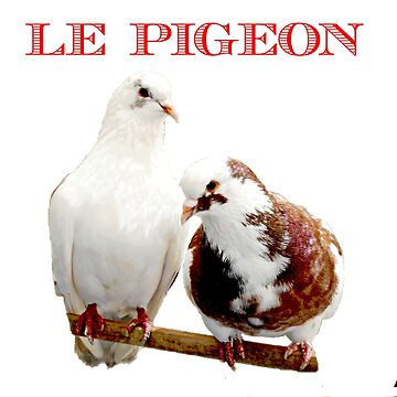 LE PIGEON by DMEIERS