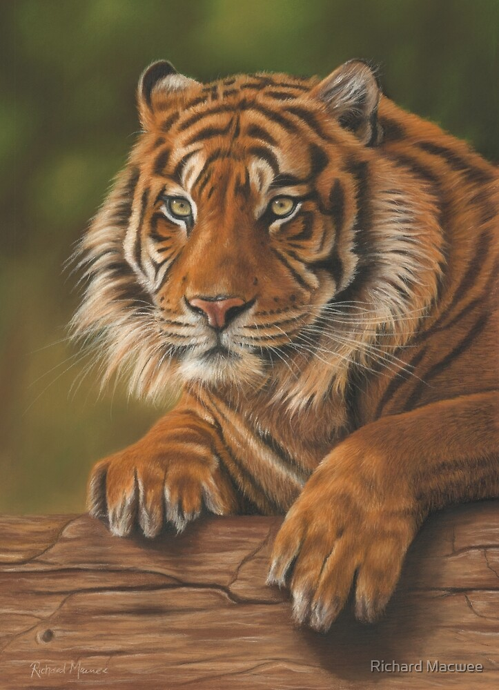 Sumatran Tiger by Richard Macwee