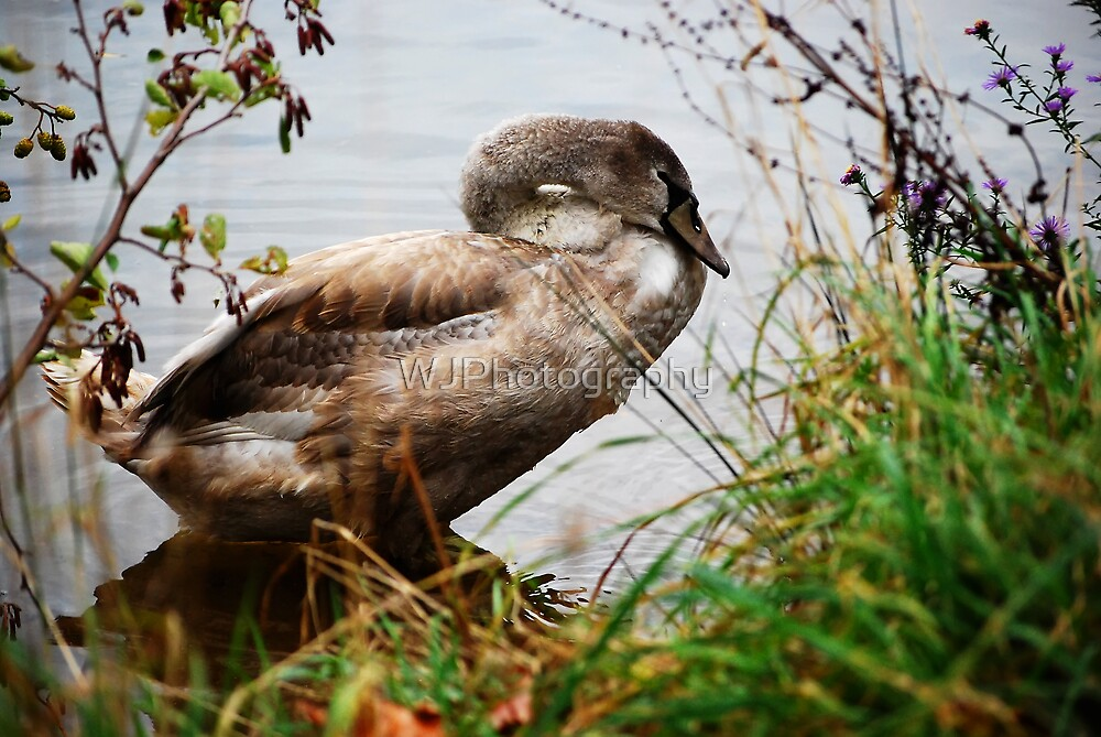 Resting by WJPhotography