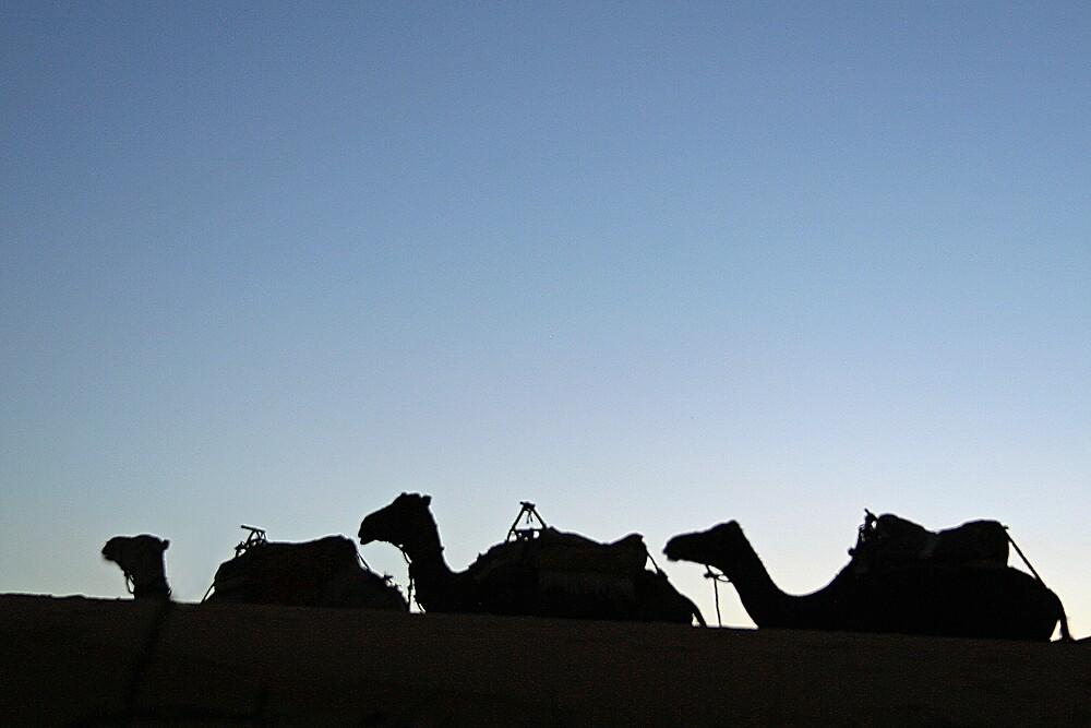 Camels by Karen Millard