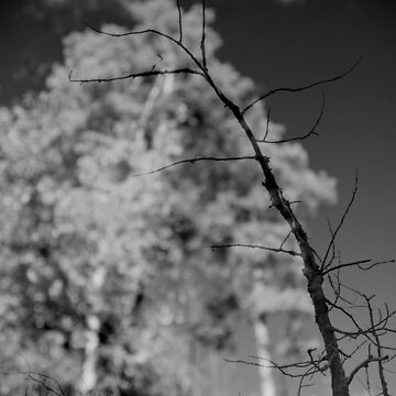 Better Hope You Can Fly (b&w) by avvio