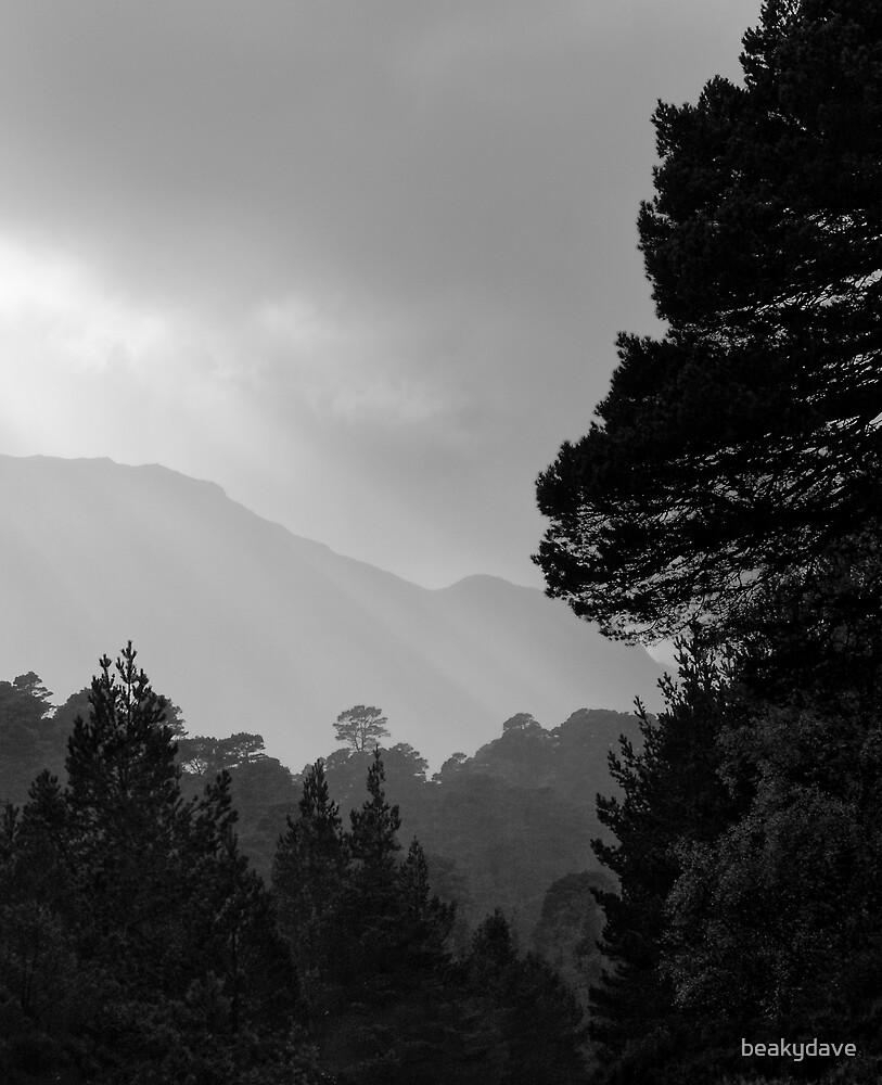 Glen Affric by beakydave