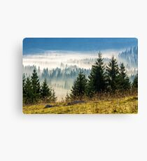 coniferous forest in foggy Romanian mountains Canvas Print