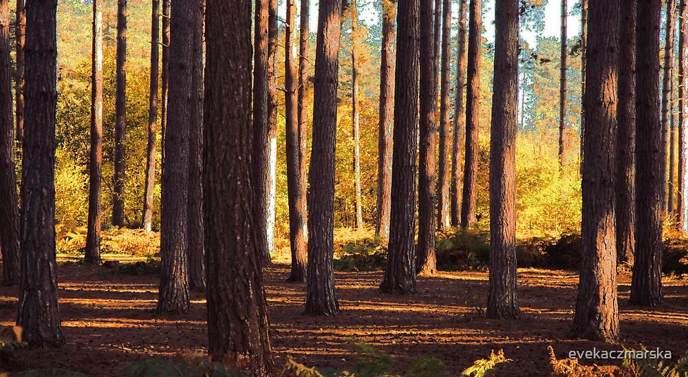 Forest by evekaczmarska
