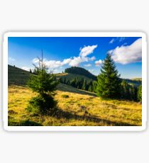 conifer forest  in mountains at sunrise Sticker
