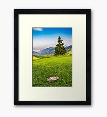 lonely fir tree on the edge of slope in foggy mountains at sunrise Framed Print