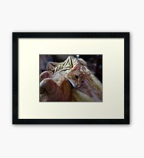 Cute Kitty Framed Print