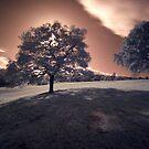 Trees by PaulBradley