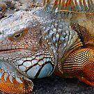 Iguana by Michael Damanski