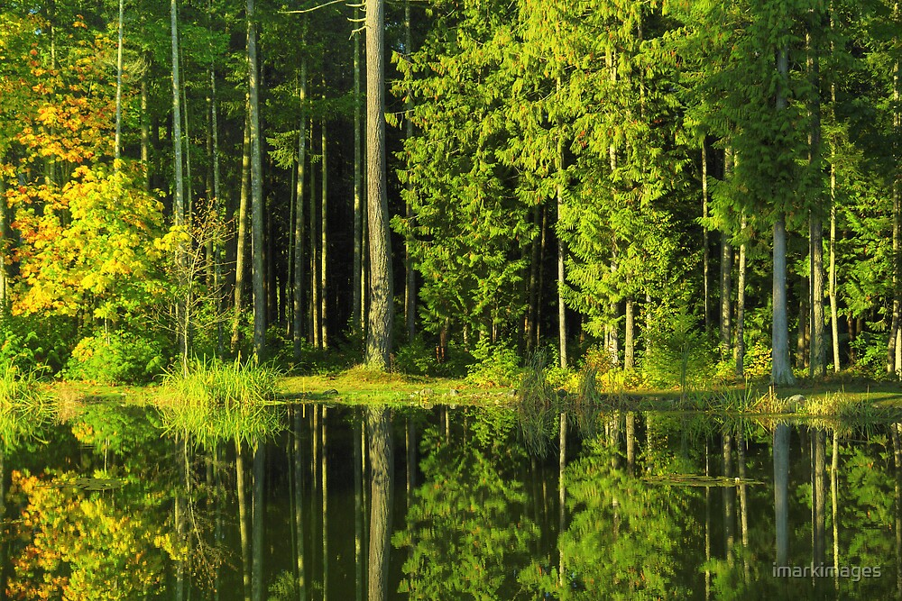 Nature Reflection by imarkimages