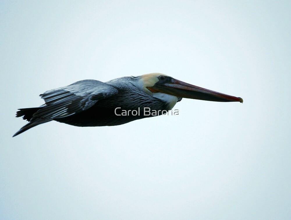 Stealth Pelican by Carol Barona