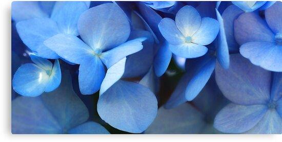 -Endless Summer (Blue Hydrangea) by T.J. Martin