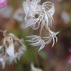 Pretty White Flower In Kings Park by lezvee