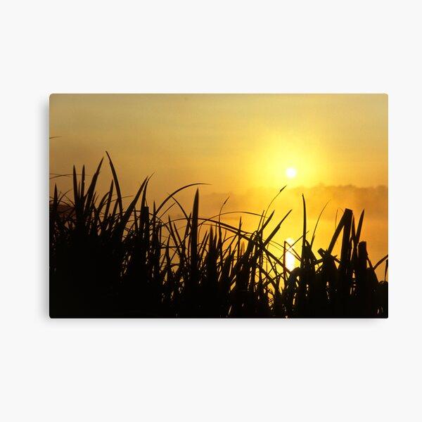 Sunrise Through The Reeds Canvas Print