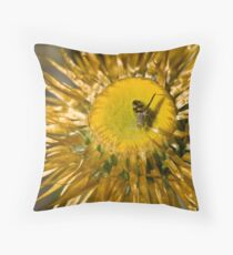 Fly on a Paper Daisy Throw Pillow