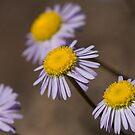Purple Wildflowers by David de Groot