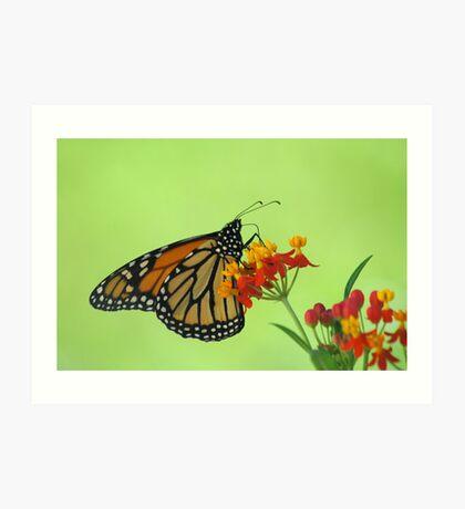 Monarch in Green Art Print