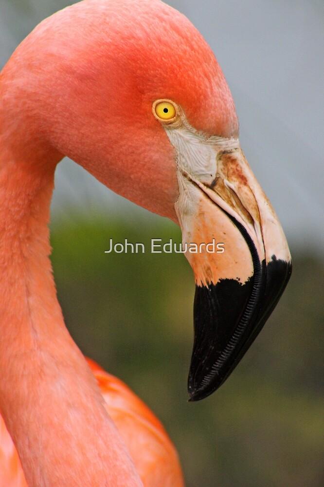 Pink by John Edwards