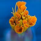 Coral. by Sherstin Schwartz