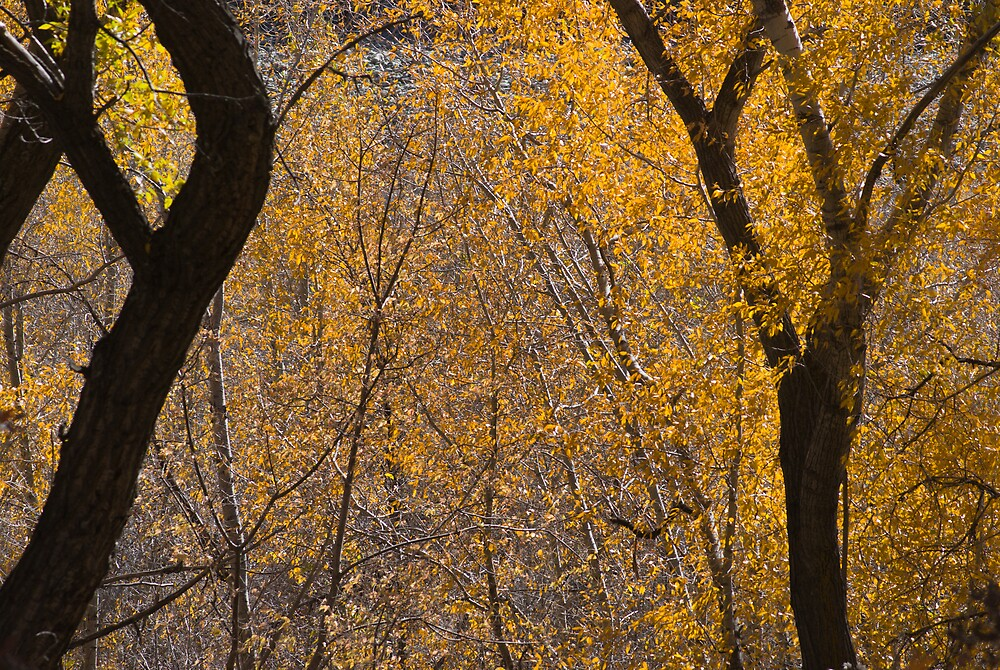 Autumn Lace by Linda J Armstrong