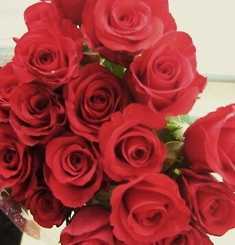 a dozen red roses by Zamia