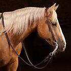 Palomino Quarter Horse at DSR Ranch by HiddenRockRanch