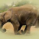 Elephant  by Sandra Willis