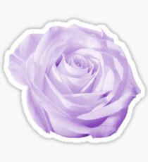 Violet Rose Flower Isolated on Colored Background Sticker