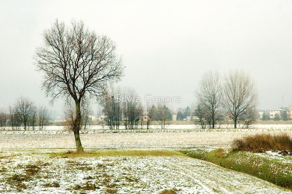 Winter bareness by Silvia Ganora