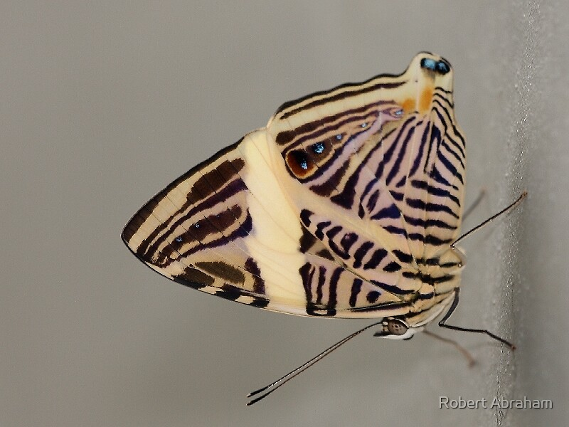 Mosaic Butterfly by Robert Abraham