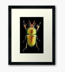 Male Golden Green Stag Beetle (Lamprima latreillii) Framed Print
