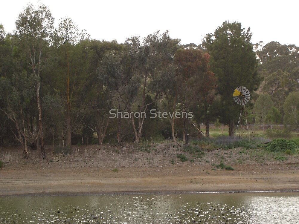Island, Inchiquin Lake, Clare SA by Sharon Stevens