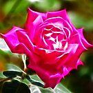 Pretty In Pink by ~ Butterfly ~