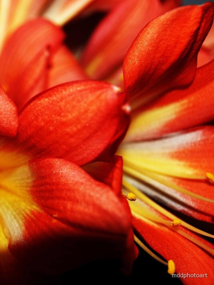 Bouquet by mddphotoart