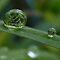 A water bubble in macro