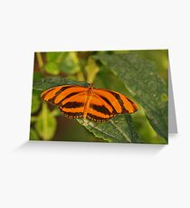Banded Orange Heliconia Greeting Card