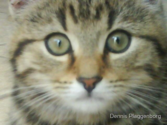 Tabby Cat by Dennis Plaggenborg
