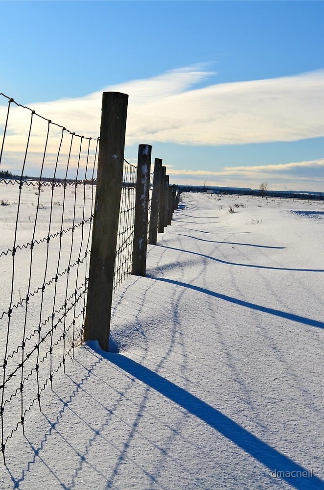 Shadows on the Snow by dmacneil
