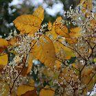 Autumn Gold by RVogler