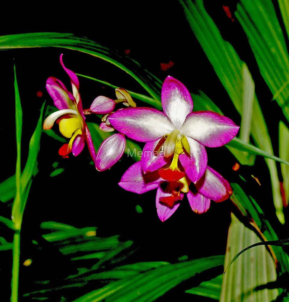 Orchids in the Shade by Memaa