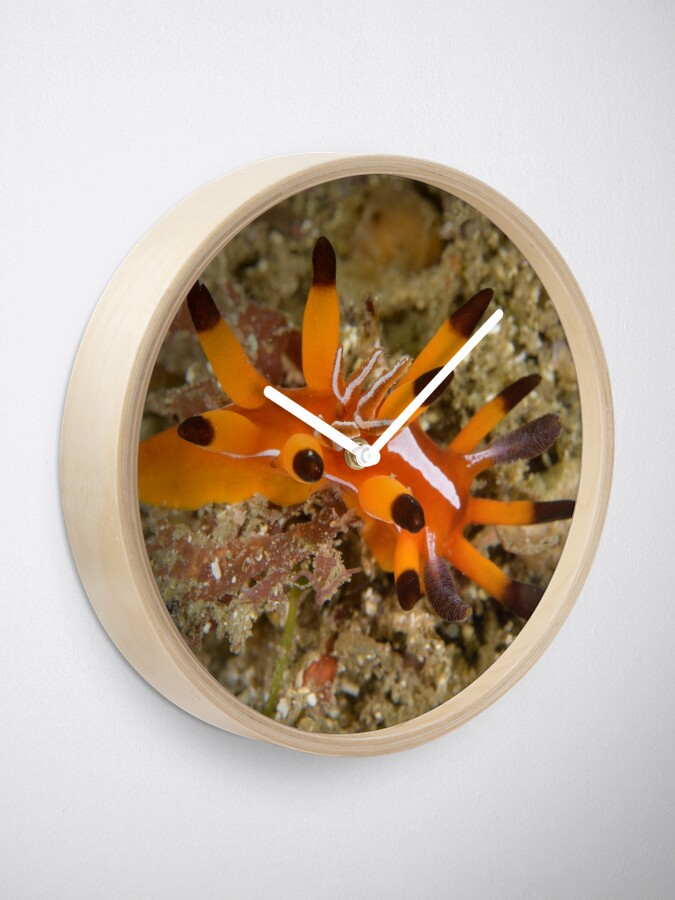 Alternate view of Nudibranch - Okenia mellita Clock