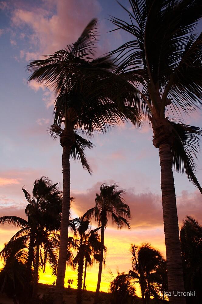 blowing palms by Lisa Utronki