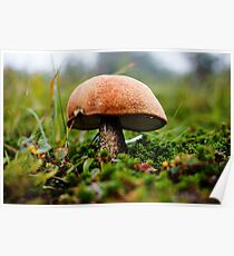 Photo of Mushroom on a Mountaintop Poster