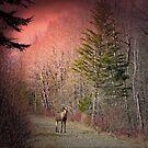 Moose At Sunrise by Gene Cyr